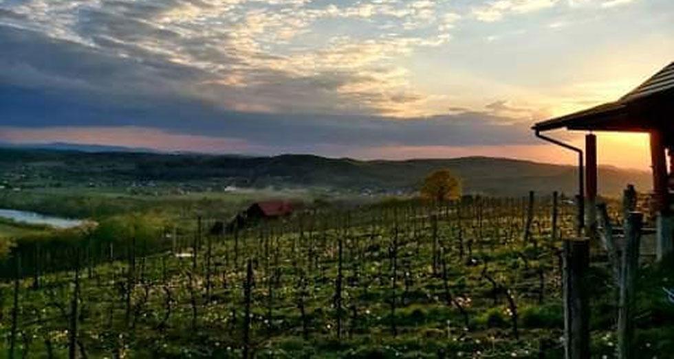 Winnica Uroczysko