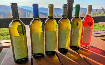 Winnica Gierowa: pachnąca winogronami i czereśniami